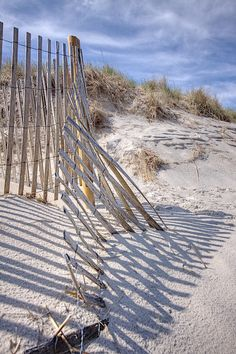 The Dunes, Cape Cod Bay, Massachusetts