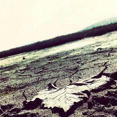 Dry county.
