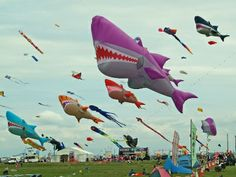 images kites - Google Search