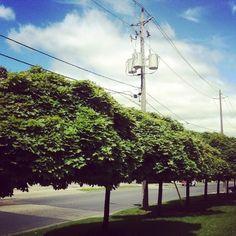 @stardchiu: Out walking after lunch - beautiful day! @fstoronto #torontolive #toronto