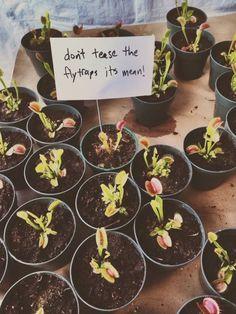 Don't tease the plants.