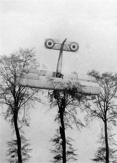 A French pilot makes a emergency landing on own terrain after a failed attack on German Zeppelin hangars near Brussels, Belgium, WWI, 1915. The aircraft, a bi-plane, has hit the trees and got stuck. Soldiers are climbing in the trees to rescue the...