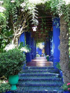 Majorelle Gardens, Marrakech, Morocco. Study abroad here on our Morocco Global Health: Maternal & Infant Health in Morocco: Women's Rights and Family in Islam. Running May 31- June 29, 2014. Application deadline is March 15th. Apply on line by visiting us at studyabroad.uwm.edu.