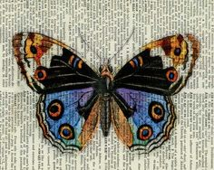 gorgeous vintage butterfly printed on old dictionary page @ etsy shop FauxKiss