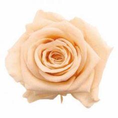 FL0100-04 Standard Rose Peach
