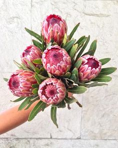 Proteas. Las flores de hoy en #atadosfloresdecorte 🌿✨ . . . . #flowershop #tijuana #lacacho #floristsofinstagram #fleur #flowers #flowergram #flowerstagram #proteas #atados #floral #flowerstagram #fleurs #fleuriste #bouquet #flower #flores #exoticflowers #protea #flor Love Flowers, Painting & Drawing, Greeting Cards, African, Instagram, Decor, Floral Arrangements, Outfit, Flowers