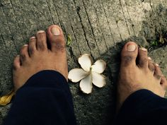 the temple flower and the feet