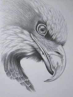 Pencil Drawings Of Animals, Animal Sketches, Bird Drawings, Art Drawings Sketches, Drawings Of Eagles, Tatto Eagle, Eagle Tattoos, Animals Tattoo, Eagle Drawing
