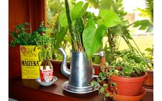Saiba plantar em recipientes caseiros - Jardinagem - iG