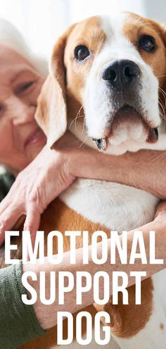 emotional support dog Fun Facts About Dogs, Dog Facts, Esa Letter, Animal Law, Support Dog, Emotional Support Animal, Dog Health Tips, Happy Puppy, Dog Care Tips