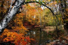 In Dreams Of Autumn --- Kay Novy.  LIMITED TIME PROMOTION http://fineartamerica.com/weeklypromotion.html?promotionid=128412