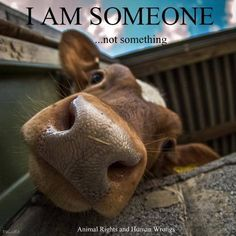 SOMEONE. We can change our stupid habits and live respecting these creatures ❤️
