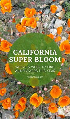The California Super Bloom Wildflower season is fast approaching, and if there is anything I've learned this past year, it's that there is no better time than the present to stop and smell the flowers. I've put together a list of areas throughout the golden state where you are most likely to find wildflower hotspots. #wildflowers Beginner Photography, Landscape Photography Tips, Landscape Photos, Travel Photography, Usa Travel, Travel Tips, Travel Destinations, Visit California, California Travel
