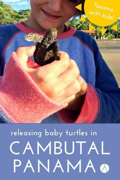 Panama with kids: Releasing baby turtles in Cambutal via @farflunglands