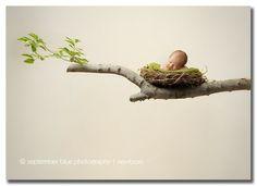 New York Newborn Photographer Toddler Photography, Newborn Baby Photography, Newborn Photographer, Photography Tips, Newborn Studio, Newborn Shoot, Newborn Pics, Baby Poses, Baby Portraits
