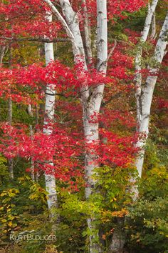 Groton State Forest, Vermont; photo by Kurt Budliger
