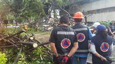 Servicios Urbanos y Protección Civil atendieron caída de árboles, postes y luminarias