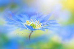 W I N D Flower - null