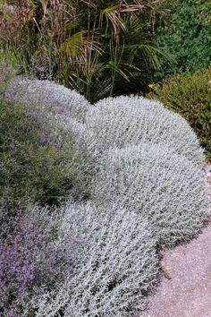 Flower Beds, Garden Inspiration, Gardening, Outdoor Decor, Flowers, Lawn And Garden, Royal Icing Flowers, Flower, Garden Beds