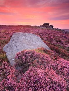 pink sunet and heather at Higger Tor, Peak District National Park, England