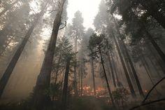 Rim Fire: Burned Areas See 'Unprecedented' Destruction  SAD so SAD