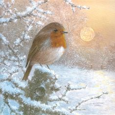 Winter Painting, Winter Art, Mary Christmas, Xmas, Robin Redbreast, Robin Bird, Winter Scenery, Study Help, Winter Pictures