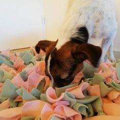 DIY Snuffelmat maken - The Dog Pen - Poes de hond Toy Puppies, Doge, Dog Food Recipes, Boston Terrier, Diy Dog, Pets, Dog Stuff, Animals, Trier
