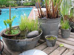 Fuentones y baldes de zinc con plantas acuáticas y palustres ★⋰⋱★⋰⋱★··٠