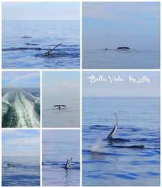 Whale Watching in New England Plymouth Massachusetts road trip ideas things to do on vacation
