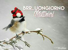 Photo about Inspirational quote about individuality by Dr. Suess, with a cute chickadee wearing his Christmas hat during a snowstorm. Image of chickadee, adorable, goal - 44320737 Day For Night, Good Night, Good Morning, Italian Memes, Good Day, Inspirational Quotes, Animals, Dr Suess, Cristiani