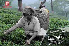 Risheehat Tea Garden