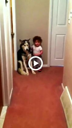 Animals Discover 10 funny cat videos to make you laugh every moments Cute Baby Animals Animals And Pets Funny Animals I Love Cats Cute Cats Funny Cats Funny Animal Videos Funny Videos Top Videos I Love Cats, Cute Cats, Funny Cats, Funny Humor, Cute Baby Animals, Animals And Pets, Funny Animals, Funny Animal Videos, Funny Videos