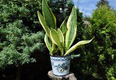 Plant pot, flower pot, planter, flowerpot, garden container, cache pot, storage home decor, metal flower pot, plant container, shabby chic