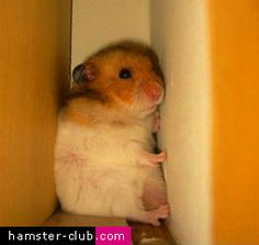 The Lost and Found Hamster