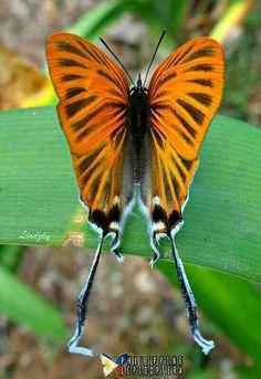 superbes papillons! 8f5f833d671c107726adb6edb537b38e--moth-butterfly