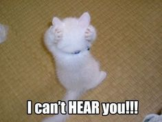 30 Funny animal captions - part 6 (30 pics)