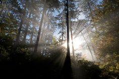Forest, Montenegro  Photograph by Milán Radisics, Wild Wonders of Europe    Crna Poda Natural Reserve, Tara Canyon, Montenegro