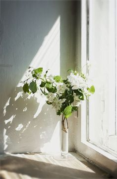 Everything about this photo—the light, the bloom—is perfect. / via Zsazsabellagio