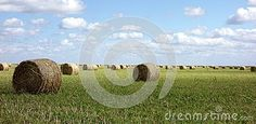 A beautiful classic panoramic image of a large flat field of straw freshly cut and rolled into round bales and spread throughout the field fading into the far horizon with a cloudy sky. Straw Bales, Panoramic Images, Agriculture, Sky, Flat, Classic, Green, Beautiful, Heaven