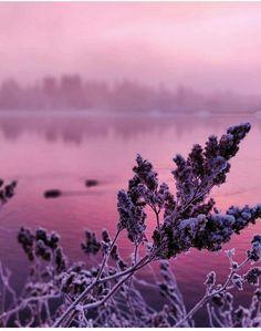 Pink moment #finlandnature