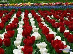 Resultado de imagem para lindos jardins floridos