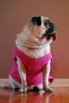 pretty in pink and pearls.. Ohhh funny!!! I might just turn my dog to a tranny lol