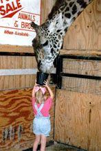 Bayou Wildlife Park (Alvin, TX):  petting zoo, Jeep safari to see animals from many continents roaming free, children's barnyard