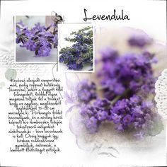 Levendula, Lavender - gazigazito.hu Malva, Lilac, Purple, Jaejoong, House Colors, Flower Power, Herbs, Flowers, Beautiful