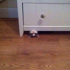 「かくれんぼ」 #KITTY #猫 #CAT #ねこ #ネコ #KAWAII