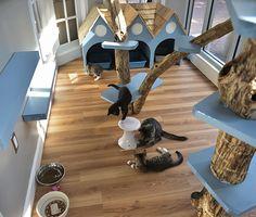 Just Cats Clinic in Reston, VA, wird katalysiert - Katzen Animal Room, Cat Play Rooms, Cat Hotel, Animal Gato, Shelter Design, Pet Resort, Pet Clinic, Hospital Design, Cat Enclosure