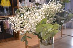 Paniculata en tienda. Flores bonitas. Universo Mini