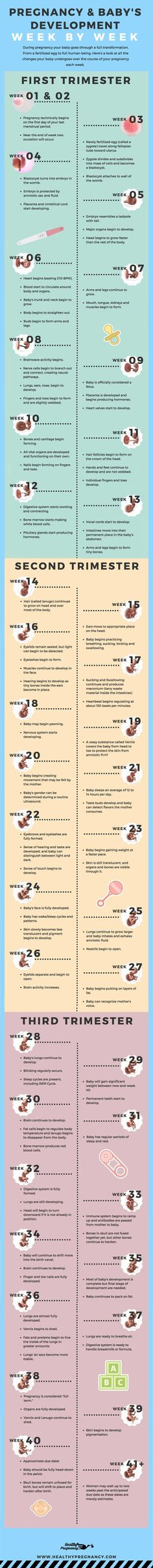 Pregnancy is a nine-month rollercoaster of changes. This guide can help you understand the changes your baby will be going through during each week of your pregnancy. Pregnant | Week by Week | Calendar | Pregnancy Calendar | Babys Development | Fetus Development | Babys Growth www.etsy.com/shop/simplyelliemae #simplyelliemae #newmom #firsttimemom #baby #babyaccessories #babyclothes #muslinswaddleblankets