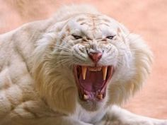 Animales en familia - Bellas imágenes. - Taringa! #BigCatFamily