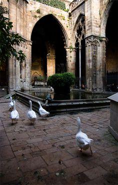 BCN of my favourites Claustre de la Catedral, Catalonia